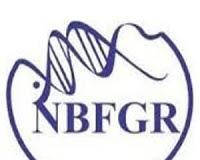 NBFGR Young Professional Jobs